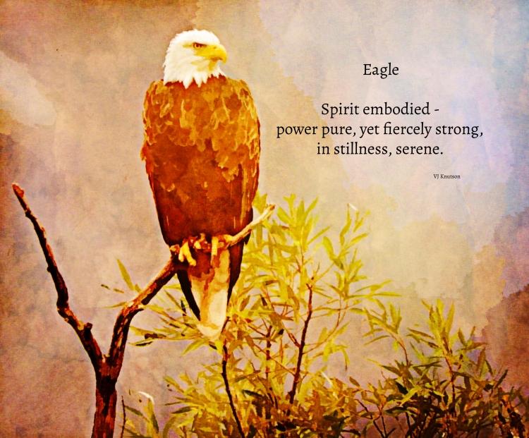 Eagle haiku