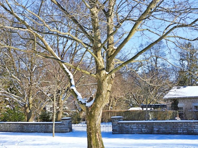 Tree with cradle copy